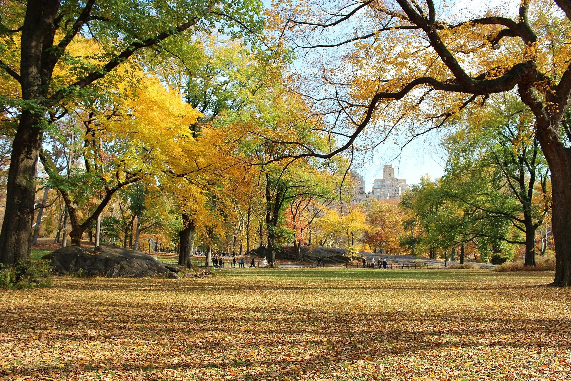 quali film vedere autunno new york central park